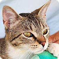 Adopt A Pet :: Bella - Palmdale, CA