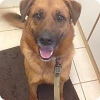 Adopt A Pet :: Sandy - Cedar City, UT