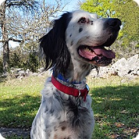 Adopt A Pet :: Jet - New Braunfels, TX