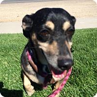 Adopt A Pet :: Zippy - Meridian, ID
