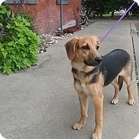 Adopt A Pet :: Reign - Shelter Island, NY