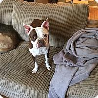 Adopt A Pet :: Polly - Van Nuys, CA