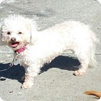 Adopt A Pet :: SOPHIE - Gustine, CA