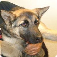 German Shepherd Dog Mix Puppy for adoption in Wildomar, California - Sky