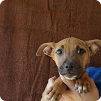 Adopt A Pet :: Mookie - Oviedo, FL