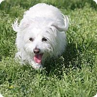 Adopt A Pet :: BABY - Gustine, CA