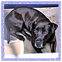 Adopt A Pet :: Chance - San Jacinto, CA