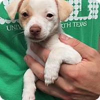Adopt A Pet :: Daphne - San Marcos, CA