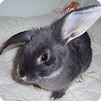 Adopt A Pet :: Barnaby - Santee, CA
