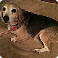Adopt A Pet :: Rocco - Indianapolis, IN