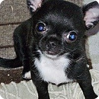 Adopt A Pet :: ONYX - AUSTIN, TX