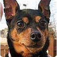 Adopt A Pet :: Tic Tac - Nashville, TN