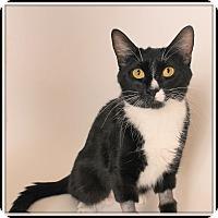Adopt A Pet :: Yoko - Glendale, AZ