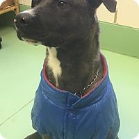 Adopt A Pet :: Burt Reynolds - Gadsden, AL