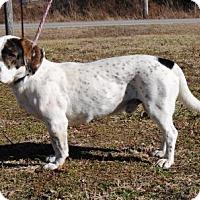 Adopt A Pet :: Fred - Parsons, KS