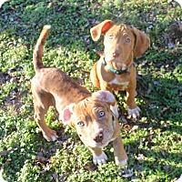 Adopt A Pet :: Walt & Disney - Huntsville, AL