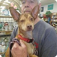 Adopt A Pet :: Hercules - Ogden, UT