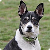 Adopt A Pet :: Harper - Harrison, NY