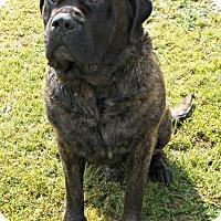 Adopt A Pet :: Anubis - Norwood, GA