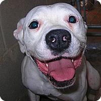 Adopt A Pet :: Precious - dawson, GA