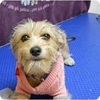 Adopt A Pet :: Sky - Alexandria, VA