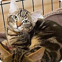 Adopt A Pet :: Mufasa - Irvine, CA