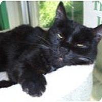 Adopt A Pet :: Bear - El Cajon, CA