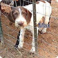 Adopt A Pet :: Max - Katy, TX