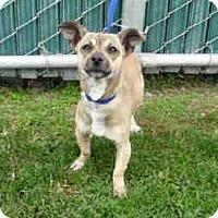 Adopt A Pet :: Emmett - Sacramento, CA