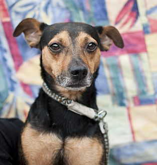 Terrier (Unknown Type, Medium) Mix Dog for adoption in Tanner, Alabama - Bosco