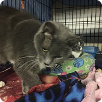 Adopt A Pet :: Dezi - Byron Center, MI