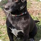 Adopt A Pet :: Declan
