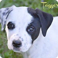 Adopt A Pet :: Taggert~adopted! - Glastonbury, CT
