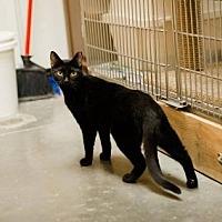 Adopt A Pet :: Dillon - Capshaw, AL