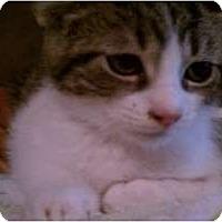 Adopt A Pet :: Dobby - New Egypt, NJ