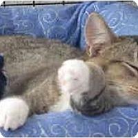 Adopt A Pet :: Baby2 - Davis, CA