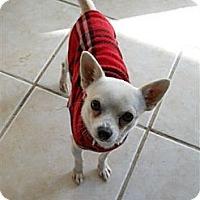 Adopt A Pet :: Chico - Plano, TX