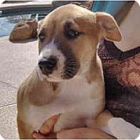 Adopt A Pet :: Aero - Scottsdale, AZ