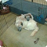 Adopt A Pet :: Mexico - Miami, FL
