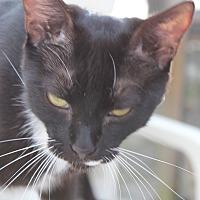 Adopt A Pet :: Francis - Naples, FL