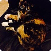 Adopt A Pet :: Pippin - McDonough, GA