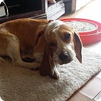 Adopt A Pet :: Tipsy - Homewood, AL