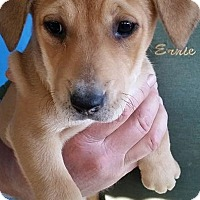 Adopt A Pet :: Sandra - Gainesville, FL
