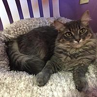 Adopt A Pet :: Lambchop - Topeka, KS