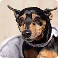 Adopt A Pet :: Buddy - Tijeras, NM
