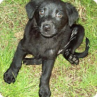 Adopt A Pet :: Tori - Waller, TX
