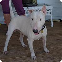 Adopt A Pet :: Sparky - Nashville, TN