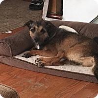 Adopt A Pet :: Marlon - Saddle Brook, NJ