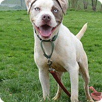 Adopt A Pet :: Pebbles - Lacon, IL