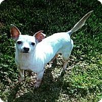 Adopt A Pet :: ASHLEY - ROCKMART, GA